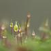 wet moss 1