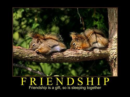 Friendship - 2 Squirrels