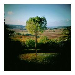Le pin de Frescatis