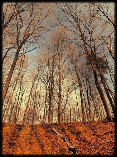 november sky tree leaves landscape rockpaper