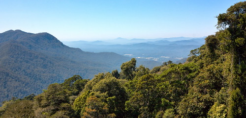 Dorrigo National Park IMG_4405