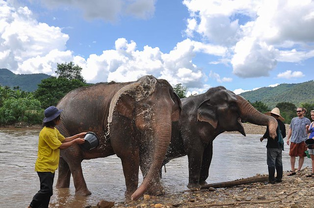 bathing elephant in river