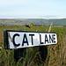 Small photo of Cat Lane