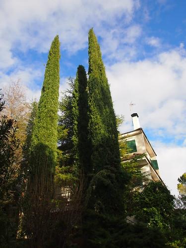 Los cipreses de la entrada by Domingo_79