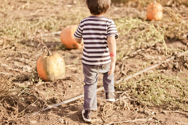 pumpkin patch_-7