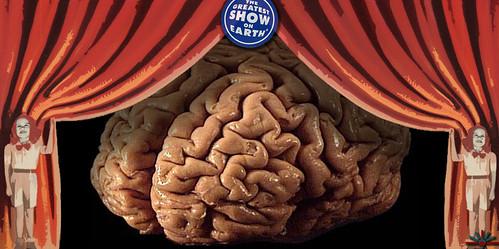 the human brain show