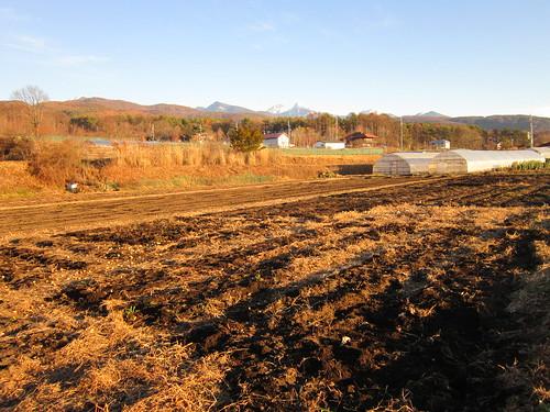 撤収した畑 2012年11月25日15:46 by Poran111
