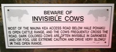 invisible_cows