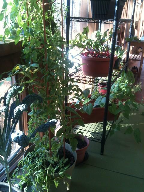 indoor garden definition meaning