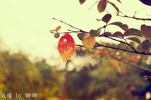 Autumn  Colors by 娜 娜☂Nana