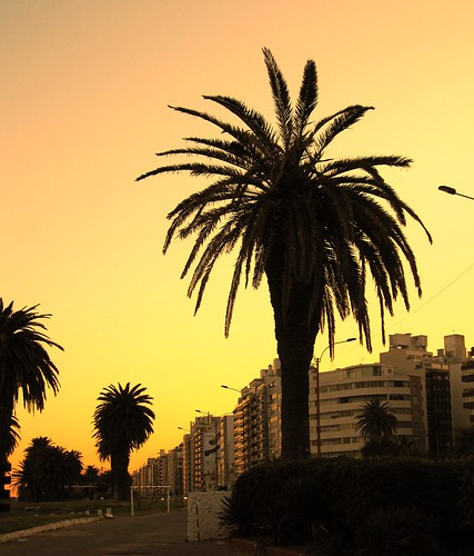 malecon, Pocitos, Montevideo, Uruguay