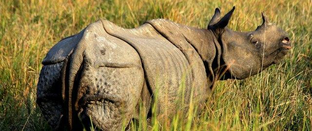 kaziranga national park pictures