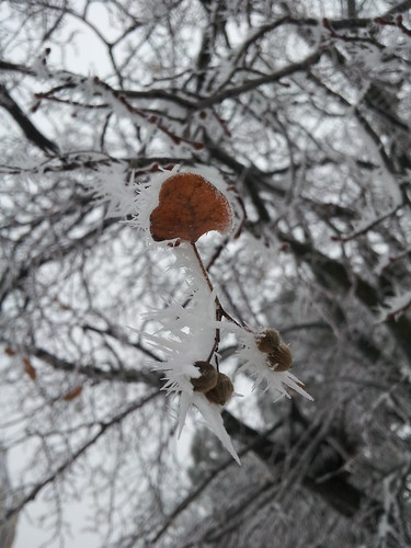 Frozen leaves by crisscrossgirl