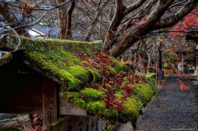 「秋移ろい」 室生寺 - 奈良