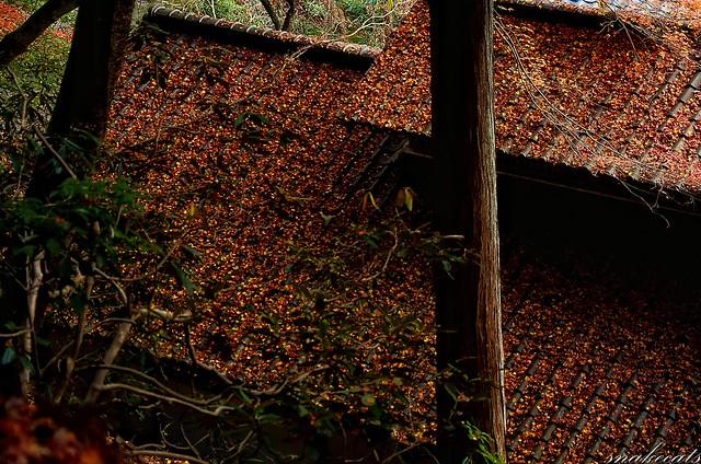 「落ち葉つもりて」 室生寺 - 奈良