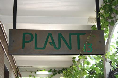 8239163485 069830bfce Plant 13 Bowden