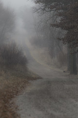 Foggy Road_49121_.jpg by Mully410 * Images