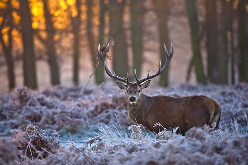 Richmond Park, Misty Morning Sunrise