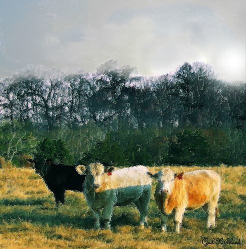 photoshop cows thegalaxy flickraward paintingtexture gailpiland ringexcellence blinkagain rememberthatmomentlevel1 rememberthatmomentlevel2 rememberthatmomentl1