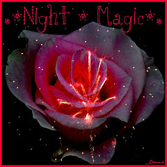 .★Night * Magic★. Award
