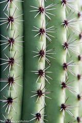340/365 - Cactus