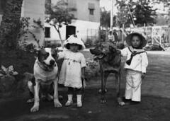 Crèdit foto: Ballell, Frederic/Arxiu Fotogràfic de Barcelona: Concurs de gossos al Turó Park.