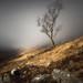 Silver Birch by Roksoff