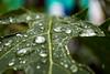 Gotas de lluvia III