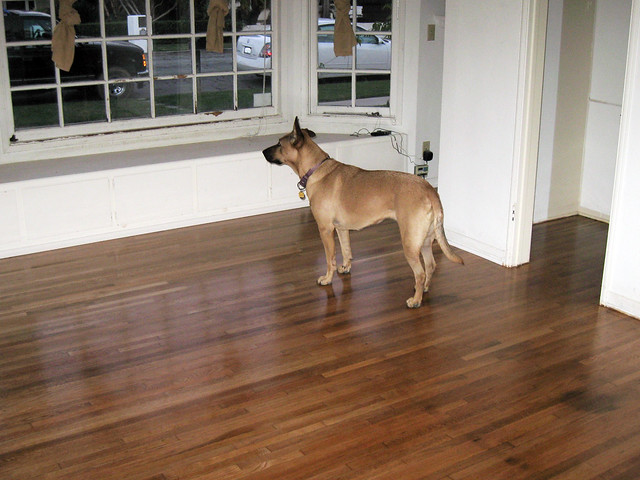 Hardwood floors front bedroom after refurbishment for Hardwood floors good for dogs
