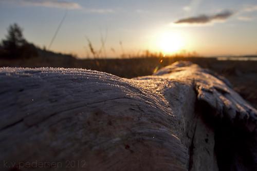 sparkle driftwood