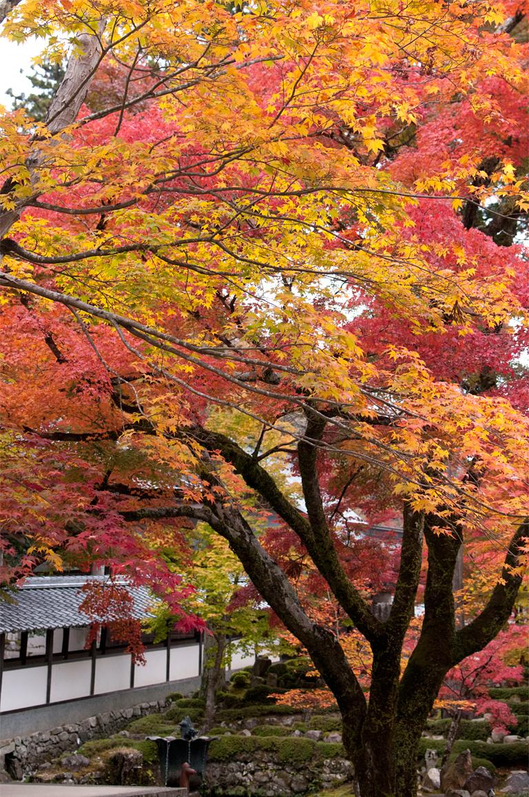 autumn jewel|永源寺