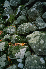 石垣に落葉 / Leaves on rock wall