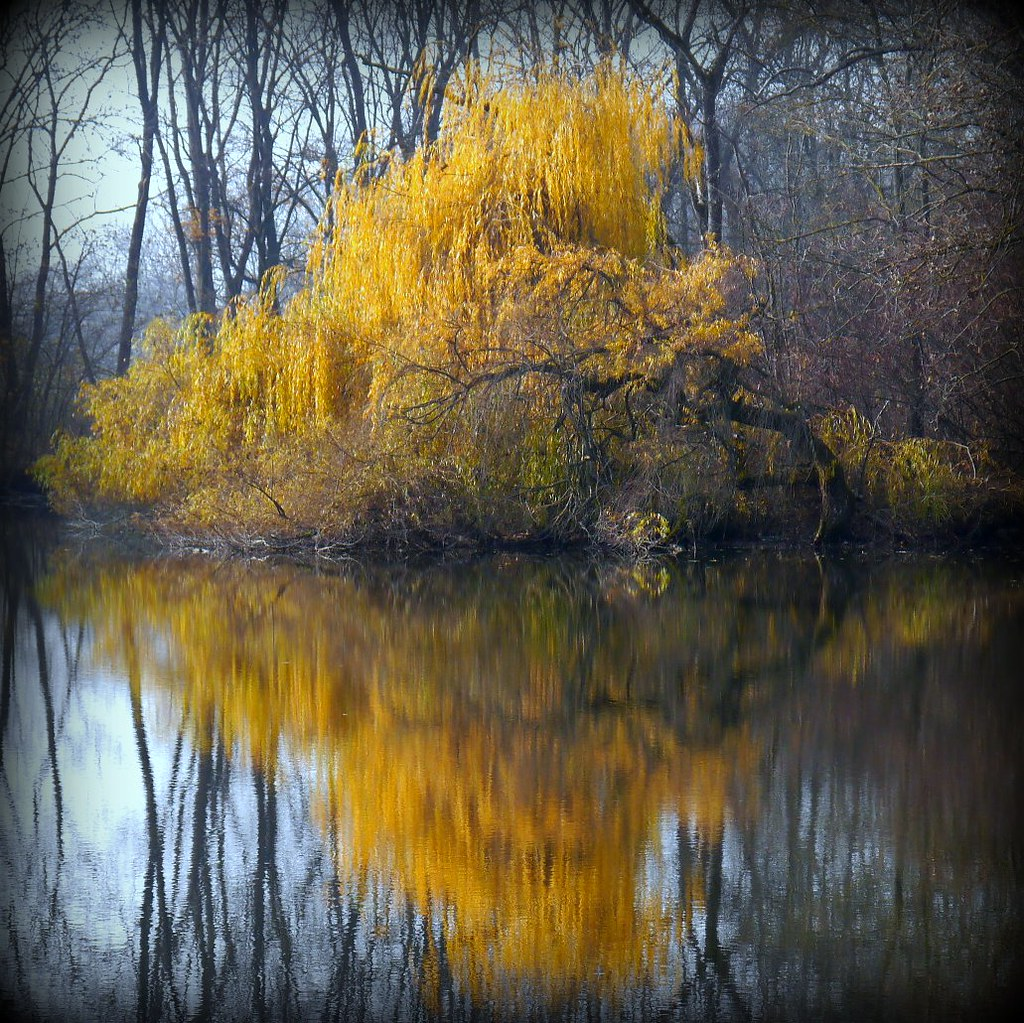 --- November Golden Reflection ---