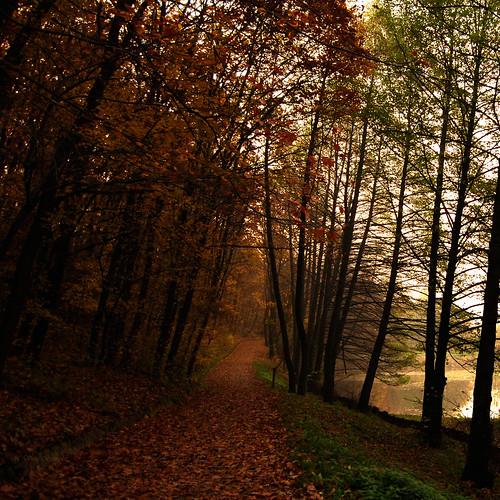 forest hungary explore pécs hajnal dettyplease mesélapécsierdő