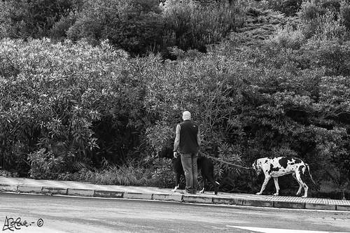 323/365+1  Paseando a los perros by Bakalito (Antonio Benítez Paz)