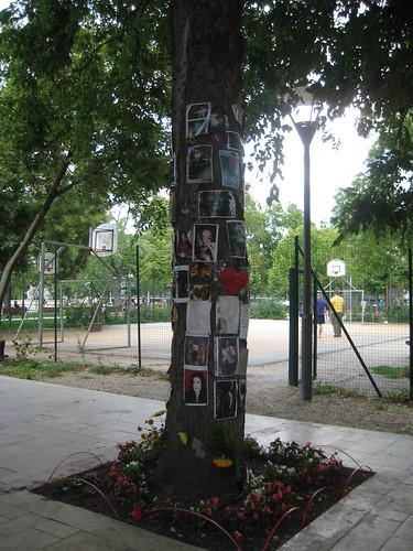 Jacksonin muistopuu