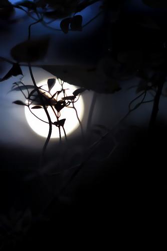 Bestiaire noctune. by Ségozyme