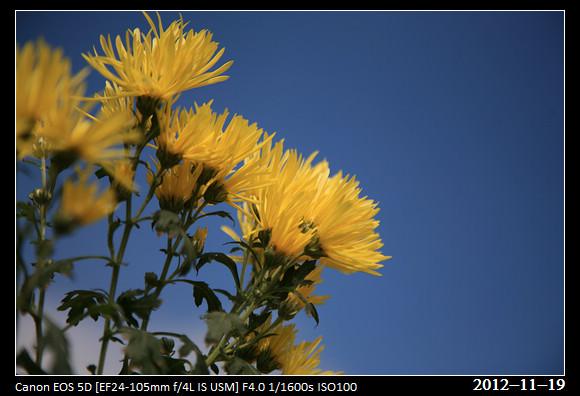 20121119_Flower17