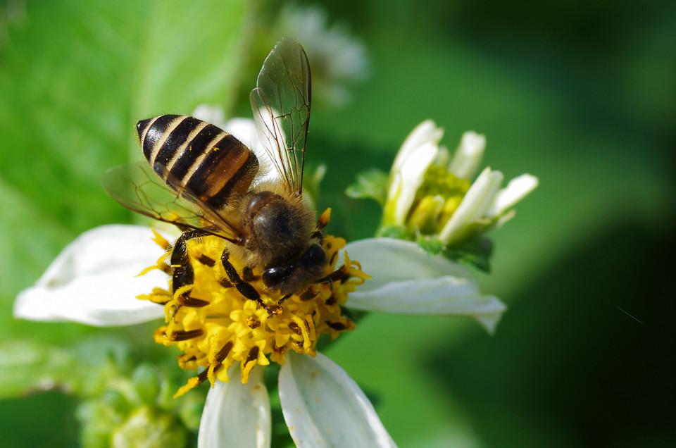 追著蜜蜂跑~~