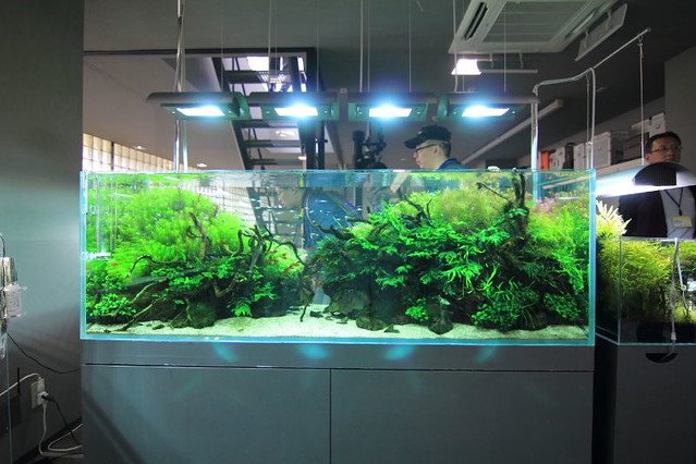 Re: Some Pics From ADA Galery 2012 For Your Aquascape Inspiration