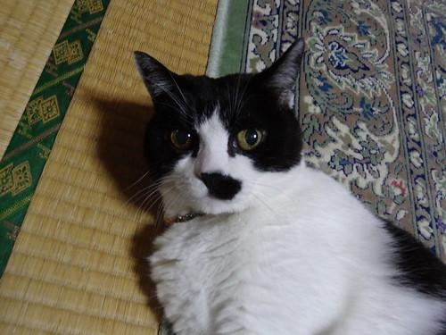 るう(2012/09/04)