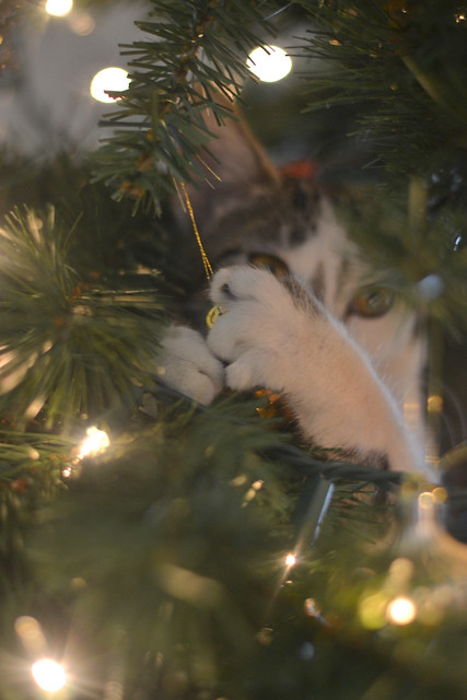 Stella in the Christmas tree