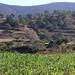 Home and corn field, cerca de Teozacoalco y San Isidro, Región Mixteca, Oaxaca, Mexico por Lon&Queta