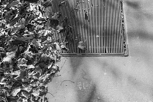 Leaves Dried Grate