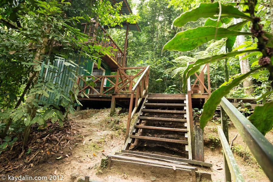 kinabalu canopy walkway
