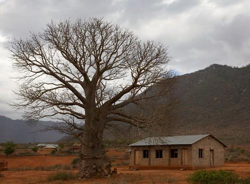 africa tanzania flickr 5star baobab canonef24105mmf4lis adansoniadigitata africanbaobab