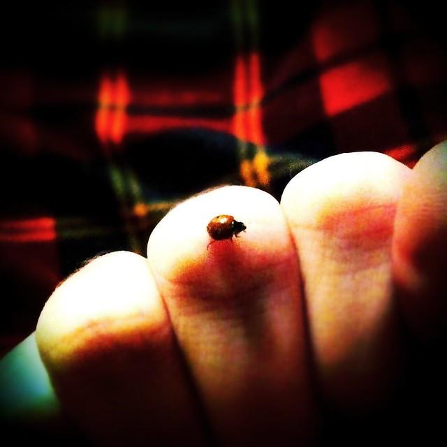 winter ladybug