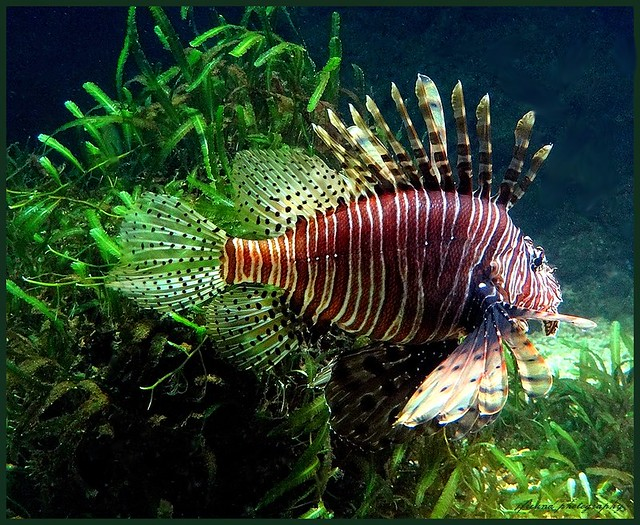 Coral reef aquarium antwerp zoo lion fish beautiful but for Freund s fish