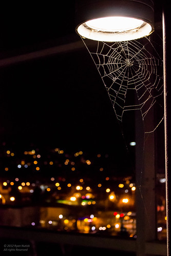 Webs of the City 1