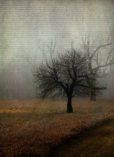 Lone Tree in a Fog